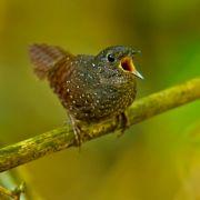 Himalaya: Forscher entdecken 211 neue Arten (Foto)