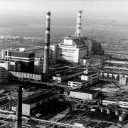 Tschernobyl wird zum Tier-Paradies (Foto)