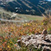 Pilzsammler finden Rausch im Wald (Foto)
