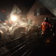Haben Tierschützer zwei Schweineställe in Brand gesetzt? (Foto)