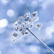 Wetter-Prognose: So wird der Winter 2015 (Foto)
