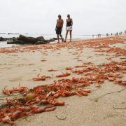 Darum fürchten Experten das Klimamonster El Niño (Foto)