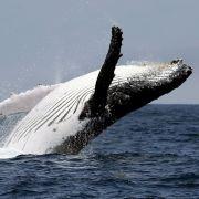 Vier Tote! Walbeobachtungsboot vor Kanada gesunken (Foto)