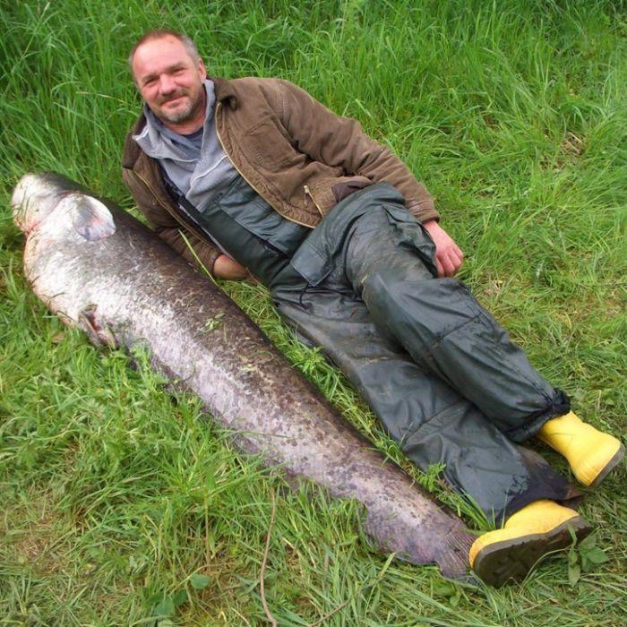 Riesen-Fisch an der Angel: Diese Bilder sind wirklich echt (Foto)