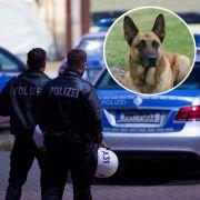 Tritte und Schläge! Flüchtlinge gehen auf Polizeihunde los (Foto)