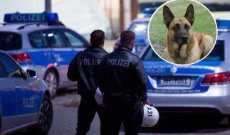 Flüchtlinge sollen auf Polizeihunde eingeprügelt haben. (Foto)