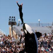 SeaWorld beendet umstrittene Killerwal-Show (Foto)