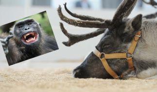 Auch im Tierreich gibt es einige Arten, die sich gern berauschen. (Foto)