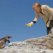 Auch das macht eine Bundeskanzlerin: Bei Eröffnung der neuen Pinguinanlage im Vogelpark Marlow bei Rostock versucht sich Merkel gleich selbst mal als Tierpflegerin.