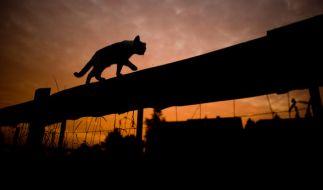 Eine australische Hauskatze hat ihre Besitzerin vor einer Giftschlange gerettet. (Foto)