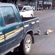 Brutal! Autofahrer schleift Hund zu Tode (Foto)