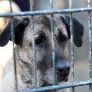 Vor Weihnachten: Viele Tierheime stoppen Vermittlung (Foto)