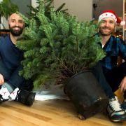 Voll im Trend! Weihnachtsbäume mieten statt wegwerfen (Foto)