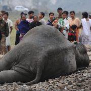 Elefant stirbt nach Horror-Crash mit Zug (Foto)