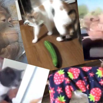 Zum Schlapplachen! Die 5 verrücktesten Tiervideos im Netz (Foto)
