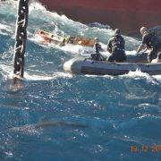 Brutal! Hai tötet Schiffbrüchigen bei Rettungsaktion (Foto)