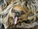 """""""Stoner Sloth"""""""