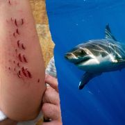 Horror-Urlaub auf Gran Canaria - Hai verfolgt Frau (Foto)