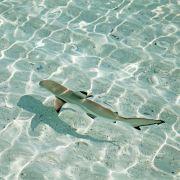 Junge (11) in knietiefem Wasser von Hai angefallen (Foto)