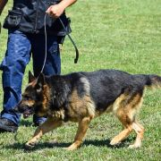 US-Polizeihund in dramatischem Einsatz erschossen (Foto)