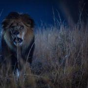 Guter Start für neue Pro7-Serie: Die Apokalypse wird tierisch (Foto)
