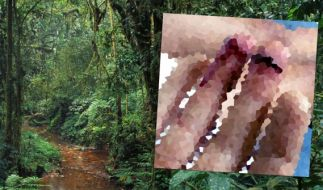 Kannibalen attackierten in Papua-Neuguinea zwei Touristen. (Foto)