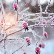 Bis zu -20 Grad! Dauerfrost in Deutschland (Foto)
