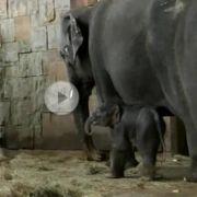 Der kleine Elefant heißt jetzt Edgar.