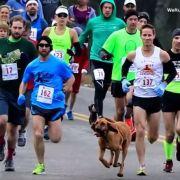 Tierisch! Dieser Hund läuft Halbmarathon (Foto)