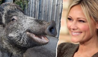 Das Wildschwein, das den Namen Helene Fischer trägt. (Foto)