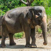 Tourist in Thailand von Elefant totgetrampelt (Foto)