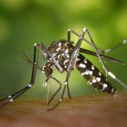 Experten warnen: Zika-Virus durch Mücken auch in Deutschland übertragbar (Foto)