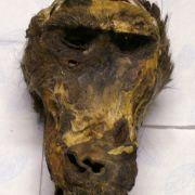 Zöllner entdecken verwesenden Affenkopf in Koffer (Foto)