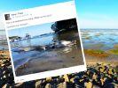Dieses Seeungeheuer verschreckt derzeit das Social Web. (Foto)