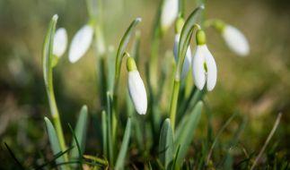 Der Hundertjährige Kalender prophezeit einen kühlen Frühlingsanfang. (Foto)