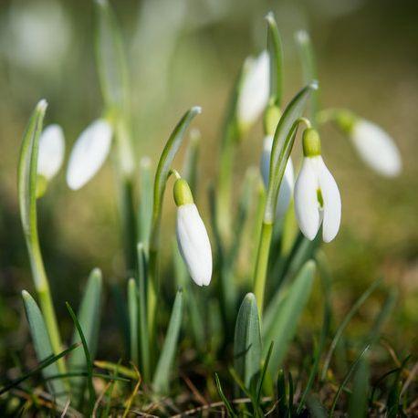 Wetterprognose: Das verrät der Hundertjährige Kalender über den Frühling! (Foto)