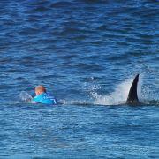 Darum gab es 2015 die meisten Hai-Attacken (Foto)
