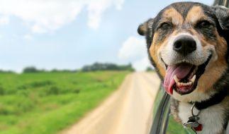Ist dieser Hund glücklich oder ist das nur eine menschliche Interpretation? (Foto)