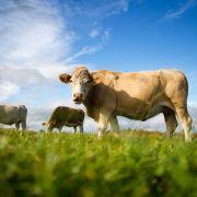 Teenie missbraucht Kuh - Notschlachtung (Foto)