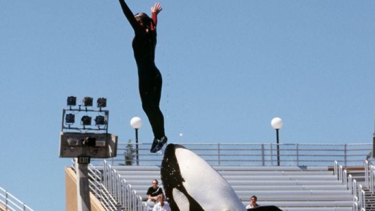 SeaWorld soll Mitarbeiter in kritischen Tierschutz-Organisationen eingeschleust haben, um dort illegale Aktionen zu provozieren. (Foto)