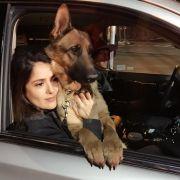 Salma Hayek geschockt! Ihr Hund Mozart wurde erschossen (Foto)