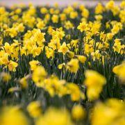 Wetterregeln, Frühlingsgefühle und Co. - Das bringt der März! (Foto)