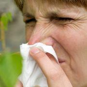 Allergie-Gefahr! Diese Pollen sorgen aktuell für Schniefnasen! (Foto)