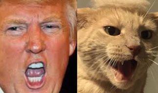"""Wenn Ärgern nicht mehr reicht, hilft nur Humor: Unter dem Hashtag """"trumpyourcat"""" setzen Katzenbesitzer ein witziges Statement gegen Donald Trump. (Foto)"""