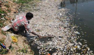 Im Ulssor-See bei Bangalore sind tausende Fische verendet. (Foto)