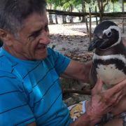 Pinguin schwimmt jedes Jahr 8.000 Kilometer zu seinem Retter (Foto)
