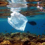 Welt erstickt im Müll - Plastik-fressendes Bakterium soll's richten (Foto)