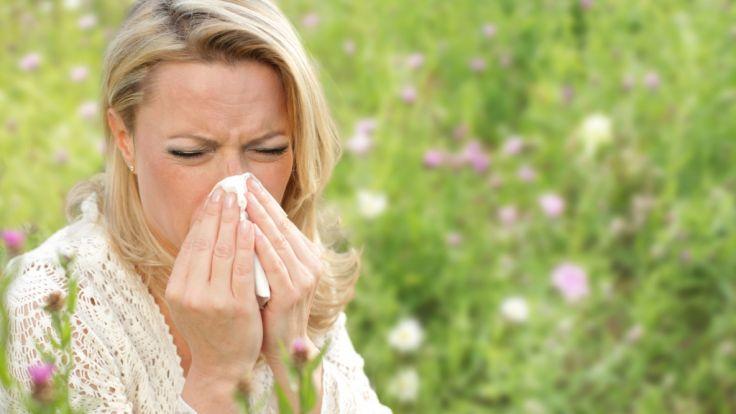 Im Februar startet die Pollensaison und plagt wieder zahlreiche Heuschnupfen-Allergiker mit Niesattacken und laufender Nase. (Foto)
