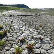 Deutschland trocknet aus! WWF warnt vor Katastrophe (Foto)
