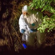 Mann entdeckt Menschenschädel bei Gartenarbeit (Foto)
